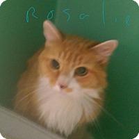 Adopt A Pet :: Rosalie - East Brunswick, NJ