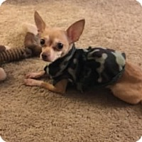 Adopt A Pet :: Kensey - Avon, NY