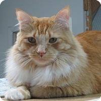 Adopt A Pet :: Ernie (Ernest Hemingway) - San Carlos, CA