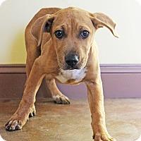 Adopt A Pet :: Karry - Waldorf, MD
