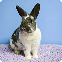 Adopt A Pet :: Scotty - Fountain Valley, CA