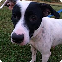 Adopt A Pet :: Sadie Mae - St Petersburg, FL