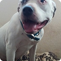 Adopt A Pet :: Marley - Los Angeles, CA