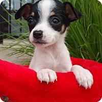 Adopt A Pet :: Frisco - Bridgeton, MO