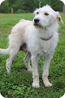 Terrier (Unknown Type, Medium) Mix Dog for adoption in Waldorf, Maryland - Dixie