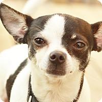 Adopt A Pet :: Trudy - Romeoville, IL
