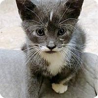 Adopt A Pet :: Mizoram - Bruce Township, MI