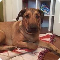 Adopt A Pet :: Jaxx - Edmonton, AB