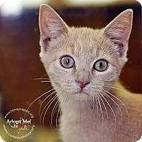 Adopt A Pet :: Ronnie - Lyons, NY