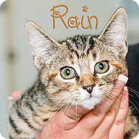 Adopt A Pet :: Rain - Somerset, PA