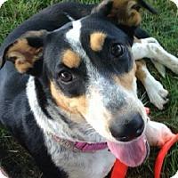 Adopt A Pet :: Juli Marie - Winfield, PA