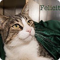 Adopt A Pet :: Felicity - San Juan Capistrano, CA