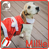 Adopt A Pet :: Millie - Novi, MI