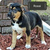 Adopt A Pet :: Rossi - Topeka, KS