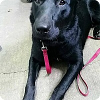 Adopt A Pet :: Sam - Marion, KY