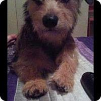 Adopt A Pet :: Marley - Santa Fe, TX