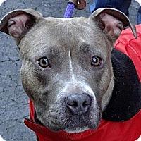 Adopt A Pet :: Jada - Nashua, NH
