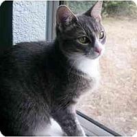 Adopt A Pet :: Athena - Elverta, CA