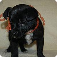 Adopt A Pet :: Rocky - Hazard, KY