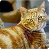 Adopt A Pet :: Otis - Marietta, GA