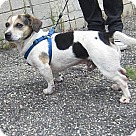 Adopt A Pet :: Gizmo- In Foster Home