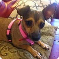 Adopt A Pet :: Delightful DoraLee - Brooklyn, NY