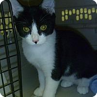 Adopt A Pet :: Bobbie - Hamburg, NY