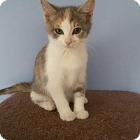Adopt A Pet :: Rosy - McDonough, GA