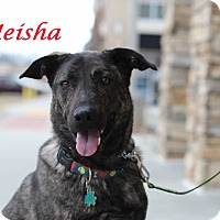 Adopt A Pet :: Meisha - Alpharetta, GA