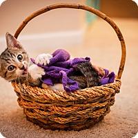 Adopt A Pet :: Rascal - Fredericksburg, VA