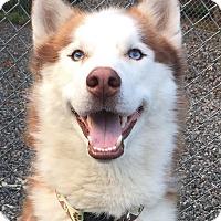 Adopt A Pet :: Alpine - Allentown, PA