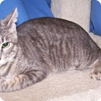 Adopt A Pet :: K-Ls6-Lucky - Colorado Springs, CO