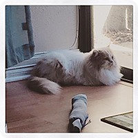 Adopt A Pet :: The Doctor - DFW Metroplex, TX