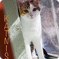 Adopt A Pet :: Katniss - Carencro, LA