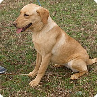 Adopt A Pet :: Vanessa - Stamford, CT