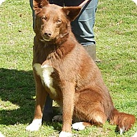 Adopt A Pet :: Blossom A Celebrate Home Dog! Lower Fees! - Locust Fork, AL