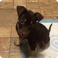 Adopt A Pet :: Temple - Barnegat, NJ