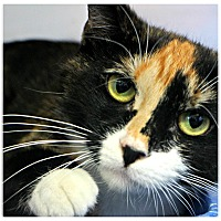 Adopt A Pet :: Hugs - Forked River, NJ