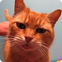 Adopt A Pet :: Cream Puff - Marlborough, MA