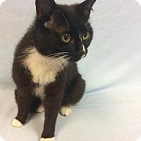 Adopt A Pet :: Cass - Moody, AL