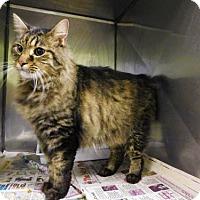 Adopt A Pet :: Fred - 071603j - Tupelo, MS