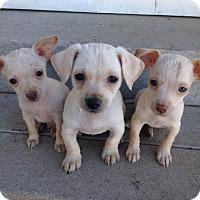 Adopt A Pet :: Joey, Kinky, Gumby - Tehachapi, CA