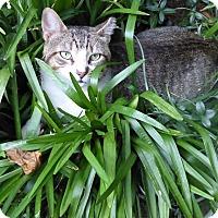 Adopt A Pet :: Winston - Harrison, NY