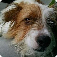 Adopt A Pet :: Skippy - Richmond, VA