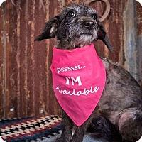 Adopt A Pet :: Sally - Sudbury, MA