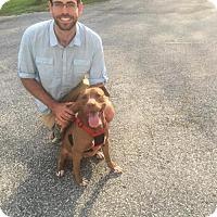 Adopt A Pet :: Sidney - Williston, VT