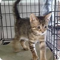 Adopt A Pet :: Nya - Port Clinton, OH