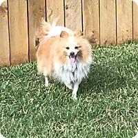 Adopt A Pet :: Journey - conroe, TX