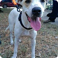 Labrador Retriever Mix Puppy for adoption in Mesa, Arizona - LEXI