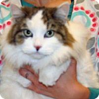 Adopt A Pet :: Bella - Wildomar, CA